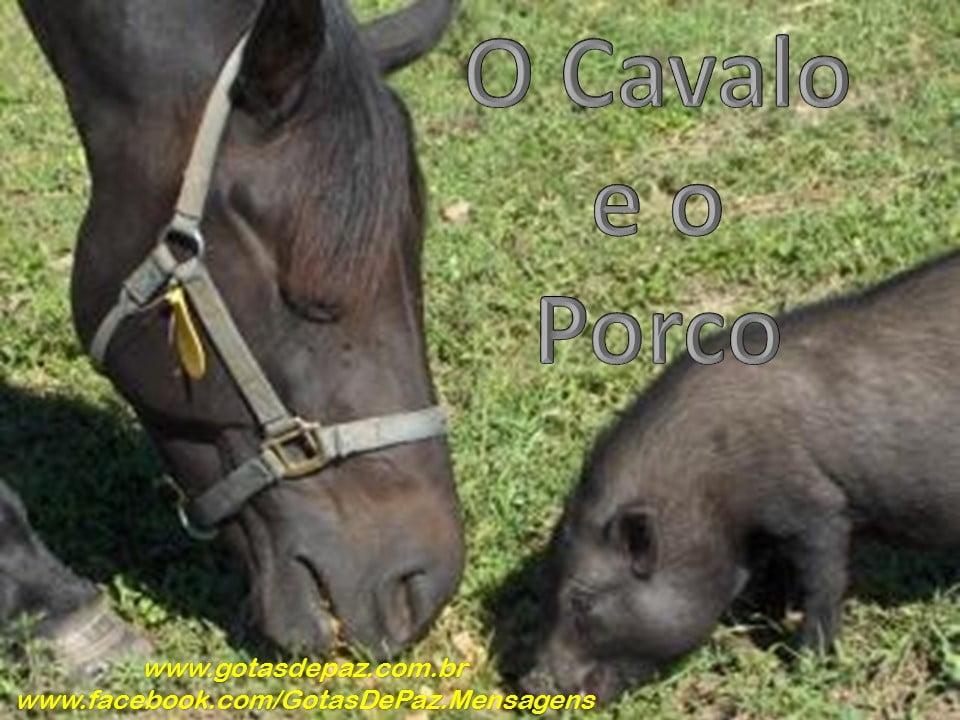 C-O Cavalo e o Porco